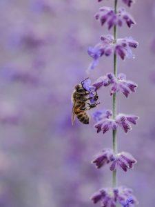 bee-friendly flowers