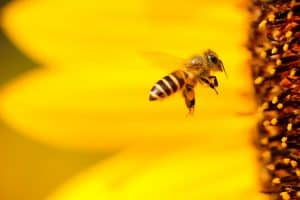 Guide to Buy Bee Products - Make the Right Purchase - Bees4life