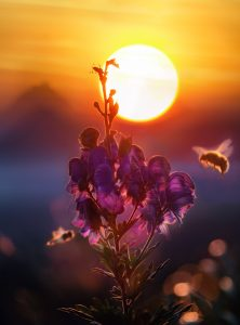 sunset-bee