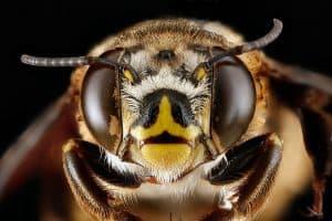 Feel like a bee