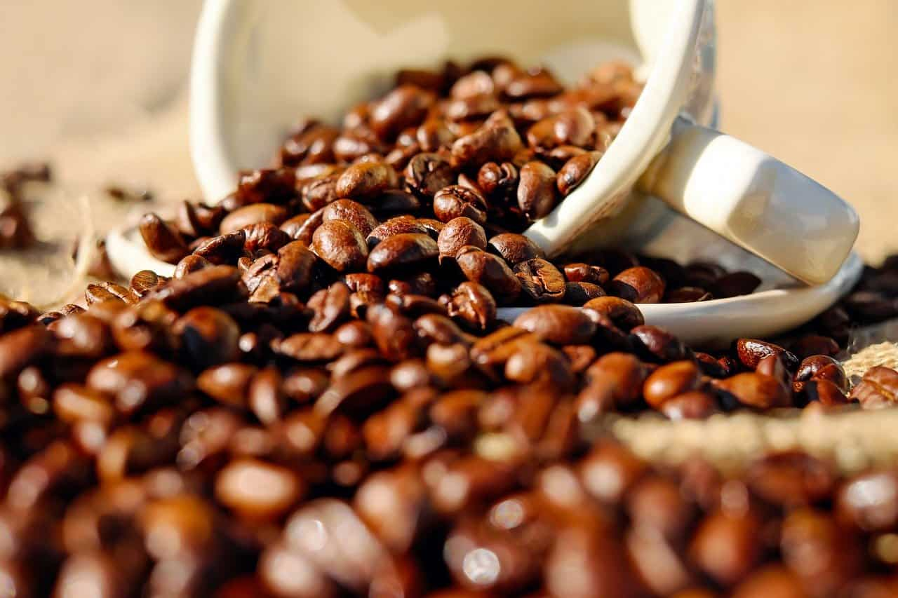 Permaculture coffee farming