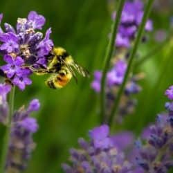 5 ways you can help protect our brilliant bees at home