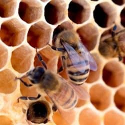 A Beginners Guide to Backyard Beekeeping
