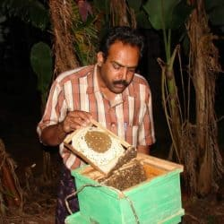 Beekeeping with Apis cerana indica